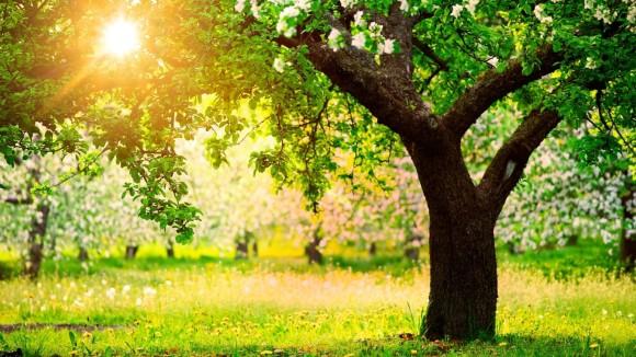 sun tree 1.1